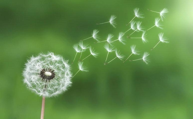 dandelion-bess-780x481.jpg