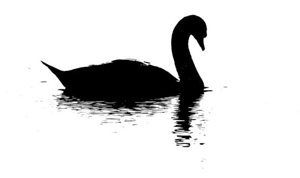 Curious Cats Catch Black Swans