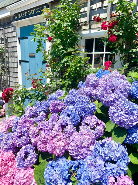 Summer 2021: 5 Things Not To Miss This Summer On Nantucket