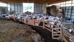 Weaning, 120 Day Weights & First Fecal Samples