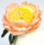 Sugar Flower Peony