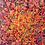Thumbnail: Anémone... | 20x20cm