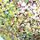Thumbnail: Les couleurs du printemps... | 50cm