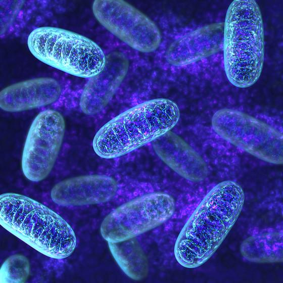 Optimising your Mitochondria