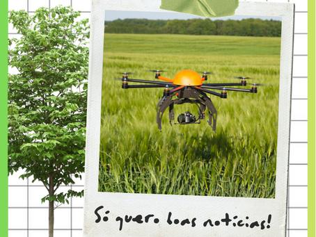 Drones plantando árvores?