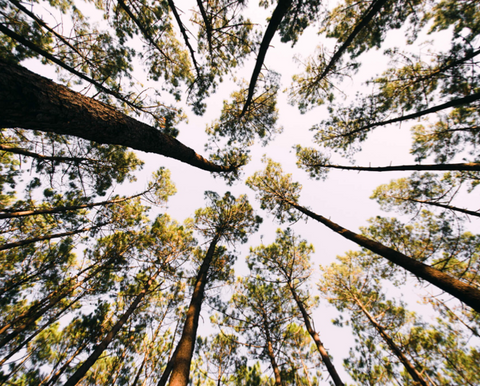 As florestas de Sintra são mesmo mágicas...