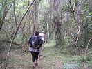 Birding the forest.jpg