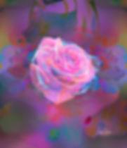 Rosa soñadora-sola-4-17-3-ajustes color-