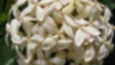 Bajadas 29 Agosto 2010 057.jpg