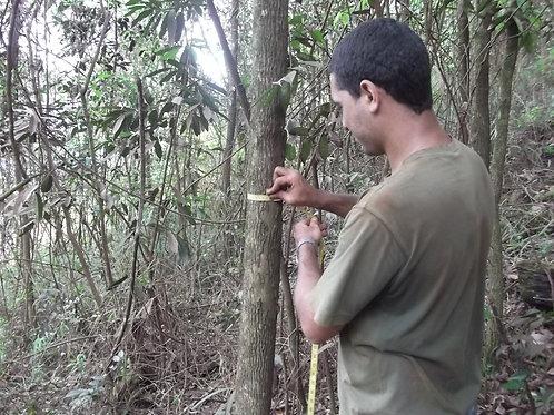 Realização de Inventário Florestal