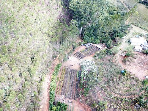 Imagem aérea do viveiro