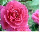 divine service flower.JPG