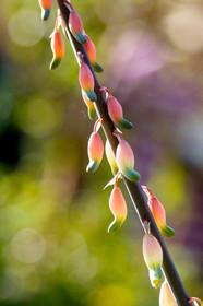 Botanical flower nature photo.jpg