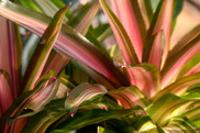 pink green leaf plant nature photo.jpg
