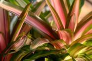 pink green leaf plant nature photo.jpg
