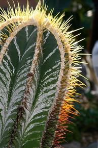 favorite cacti sun nature photo.jpg