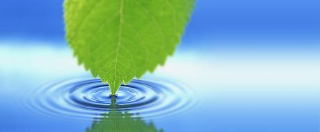 leaf water_edited_edited.png