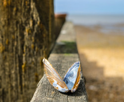 Shell butterfly_Catherine White