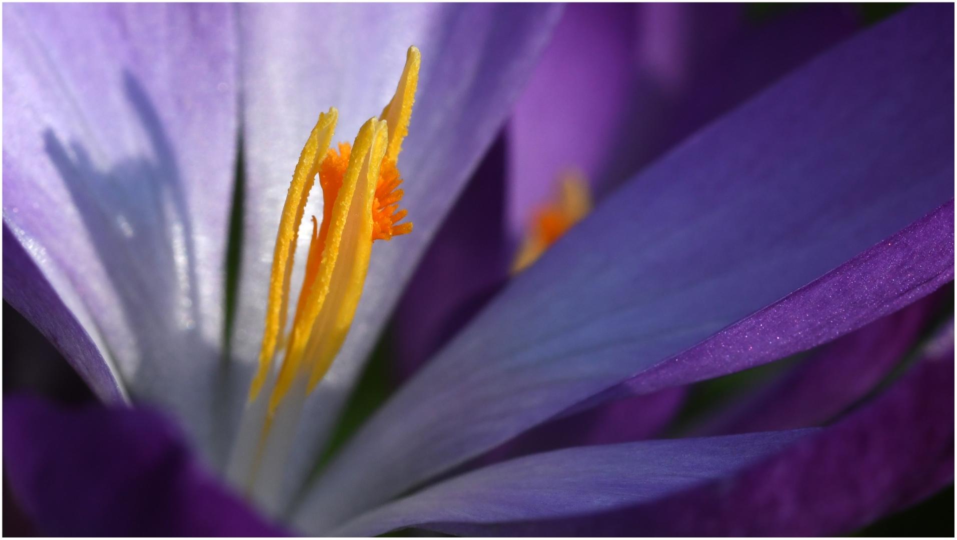 Purple and Yellow_David Mitchell