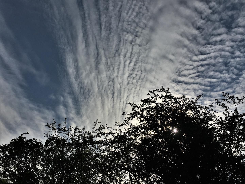 Sunshine Through The Trees_Gilly Linton.