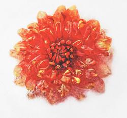 1688_Rose In Ice_David Malkin