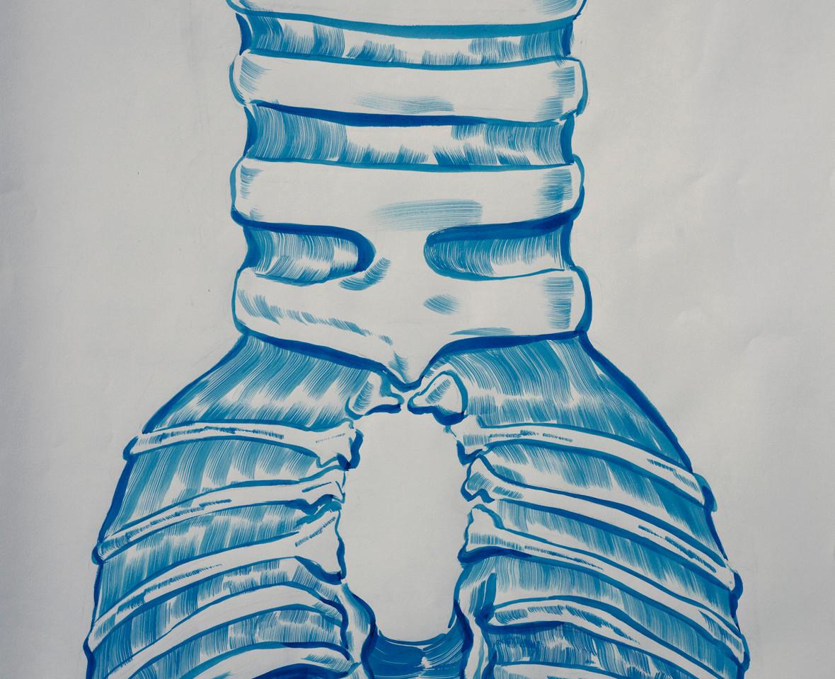 Caudal Larynx of The Turkey Hen, Facies Ventralis