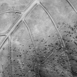 John Reed_Curved Leaf
