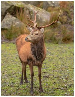 6802_Red Deer_Anthony Johnstone