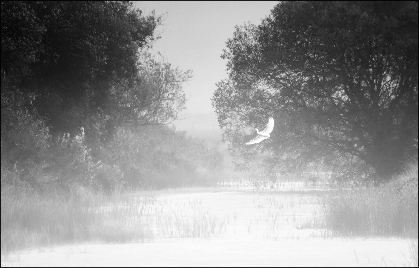 M8 Egret Out Of The Mist