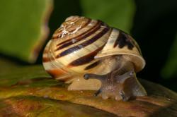 A Snails Home_Ian Gregory