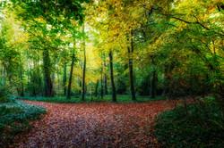 1755_Autumn Path_Sue Thomas