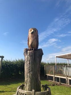 An Owl_Martin Riley