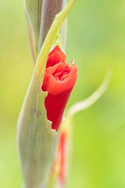 1421_Just Flowering_Paul Nettleton