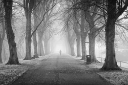 Frosty Foggy Morning In Bitts Park