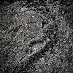Rooted In Stone