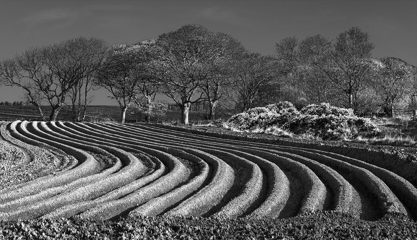 M3 Spring Furrows