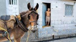 Richard Speirs_Horse Power