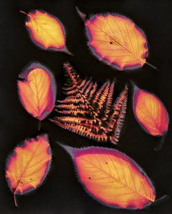 8611_Autumn Impression_David Malkin