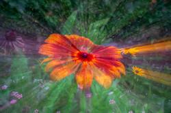Flower Power_Ian Gregory