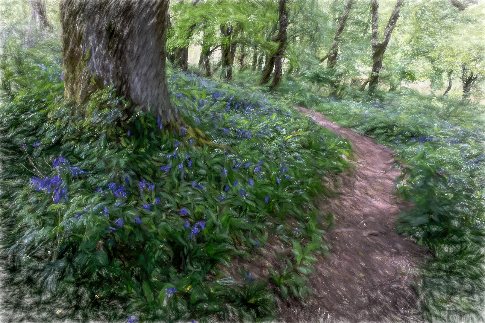 6536_Bluebell Path_John Reed