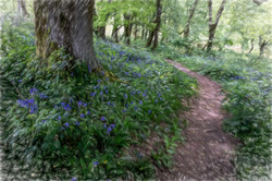 6536_Bluebell Path_John Reed