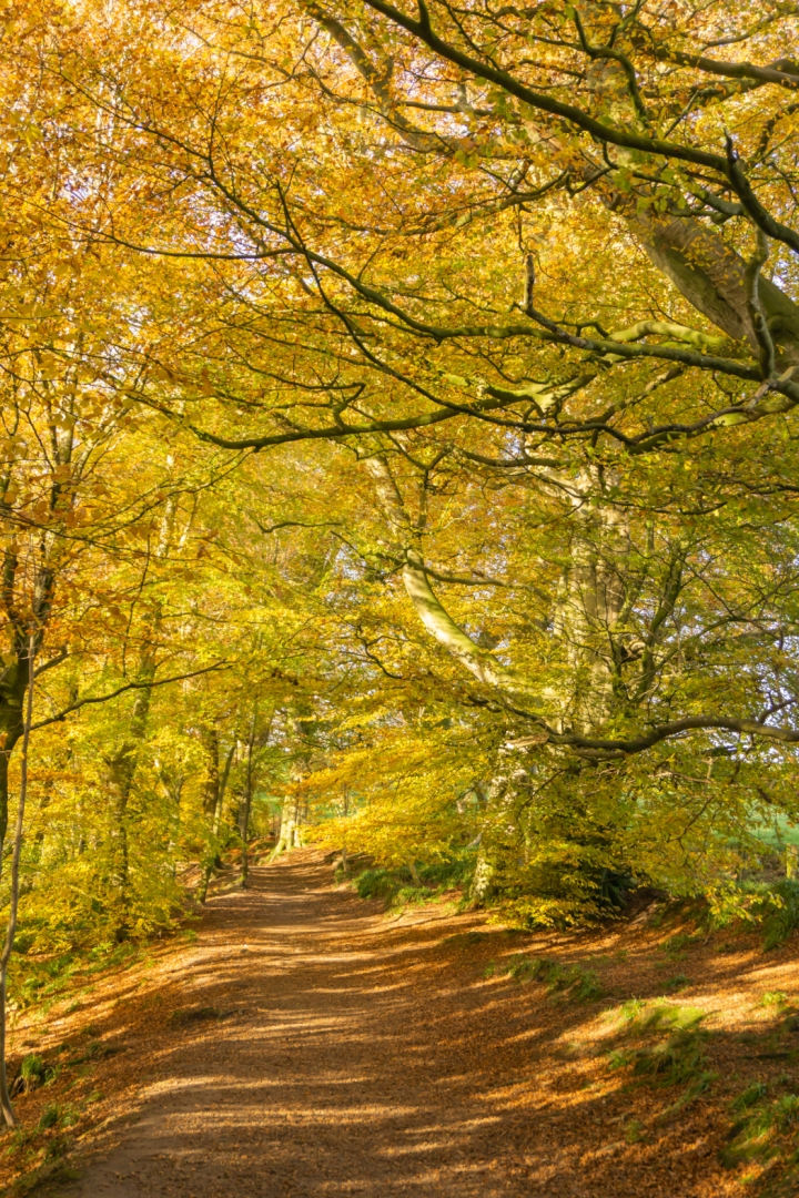 Woods 1_Tim Parmley
