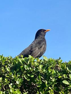 Baby Bird_Martin Riley