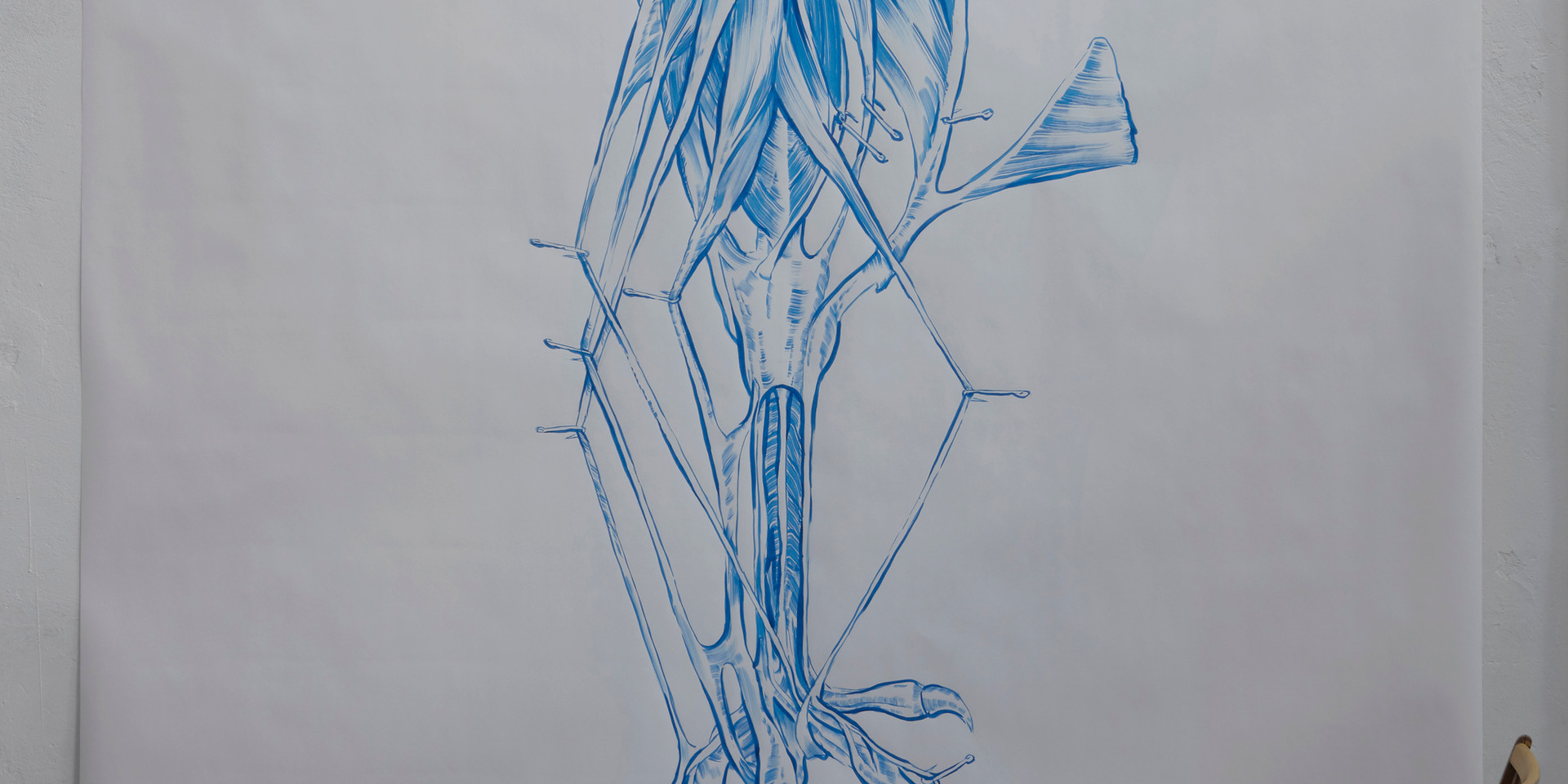 The Hen's shank Muscles