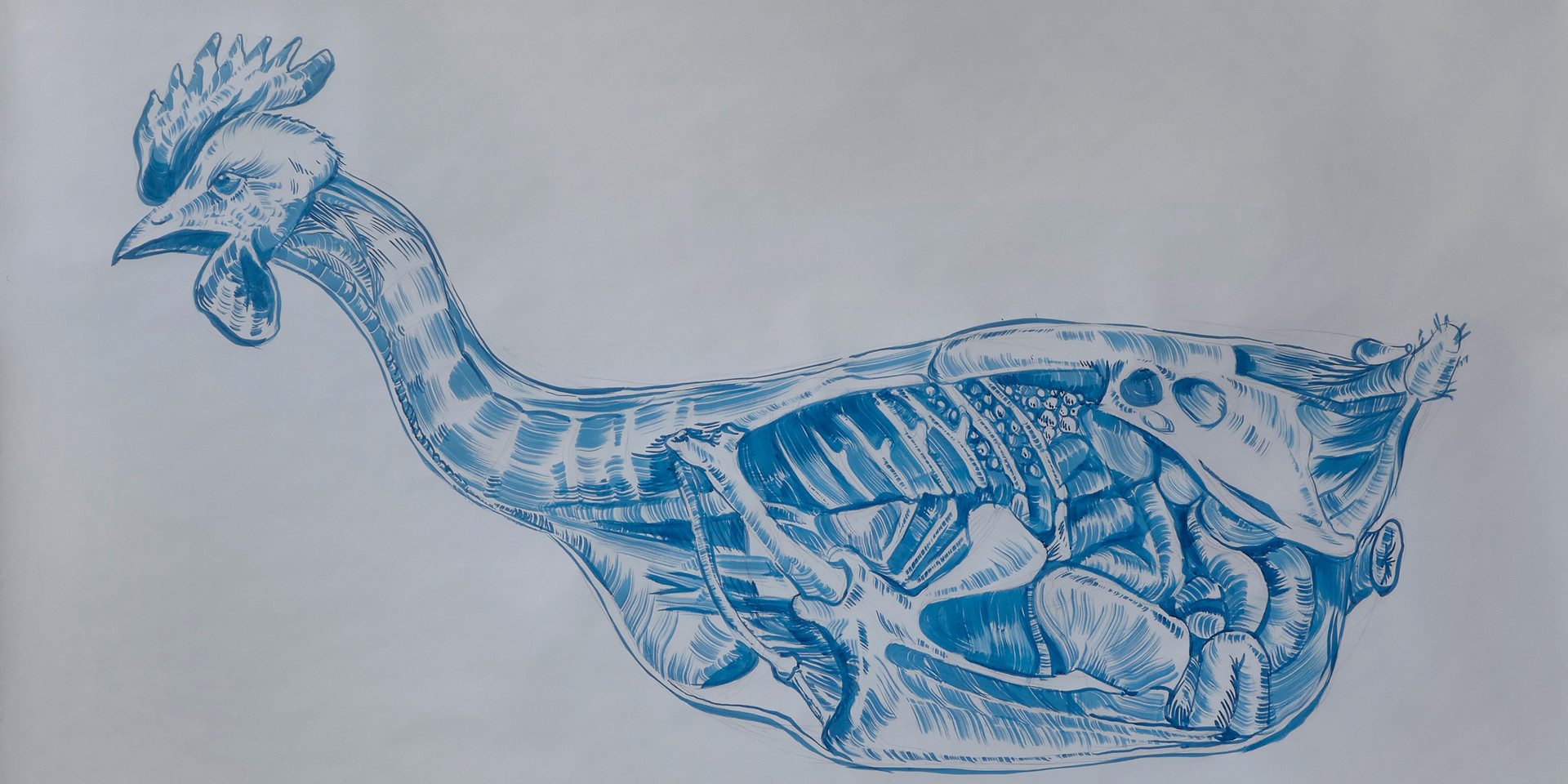 Topography of the Thoraco-Abdominal viscera in the Hen