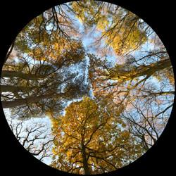 Tree Eye_Gerald Chamberlin