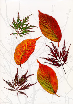 8919_Ode To Autumn_David Malkin
