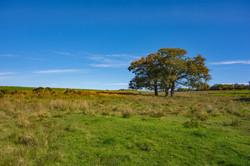 6916_Three Trees_Tim Parmley