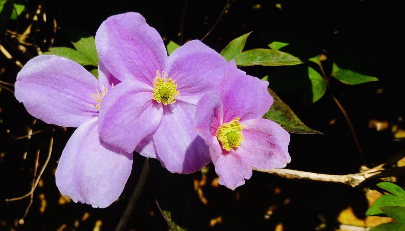 Flower 2_Martin Riley