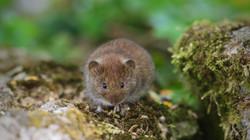 9829_Mouse_Steve Jeffrey